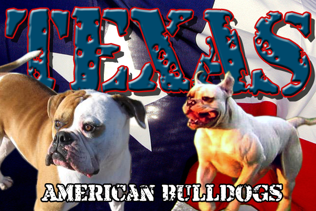 About us - Texas American Bulldogs